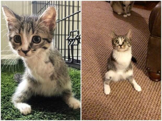 Кошечка с искалеченными передними лапами просила прохожих помочь