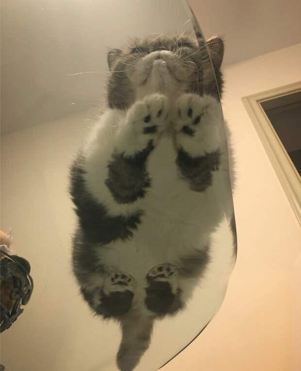 Или этой? котики, коты, милота, мотики, сквозь стекло