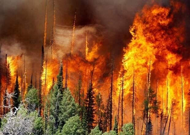 Почему леса в России горят каждый год, но все никак не догорят?