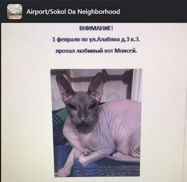 Жители улицы Алябяна всем двором вышли на поиски лысого кота