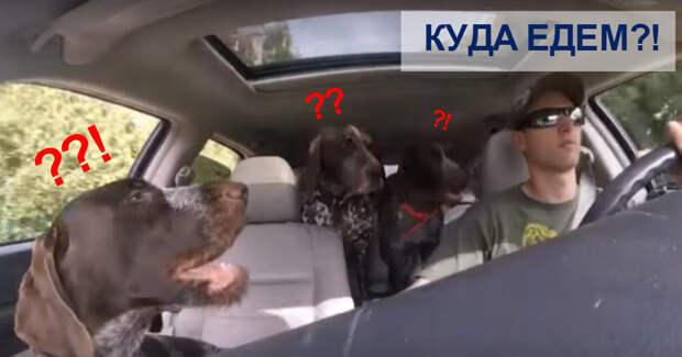 """""""Куда едем?"""" Четверо собак потеряли над собой контроль после этой фразы! И случилось вот что…"""