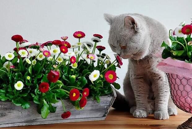 А может быть, они просто разделяют нашу любовь к садоводству?