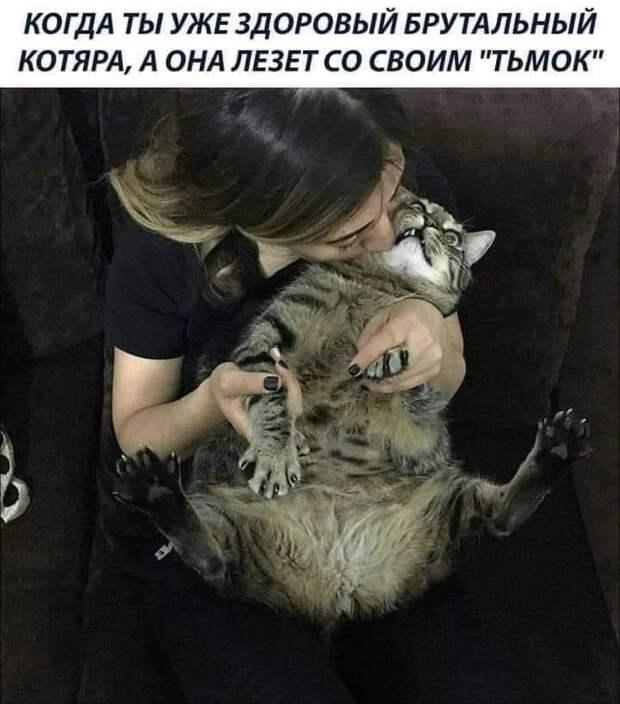 """Возможно, это изображение (кот и текст «когда ты уже здоровый брутальный котяра, A OHa лезет co своим """"тьмок""""»)"""