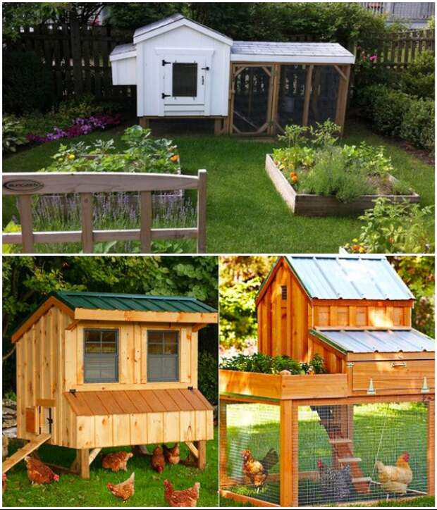 Для создания летней куриной резиденции можно использовать доски и металлическую сетку. | Фото: yellowhome.ru/ stroyka-house.ru.