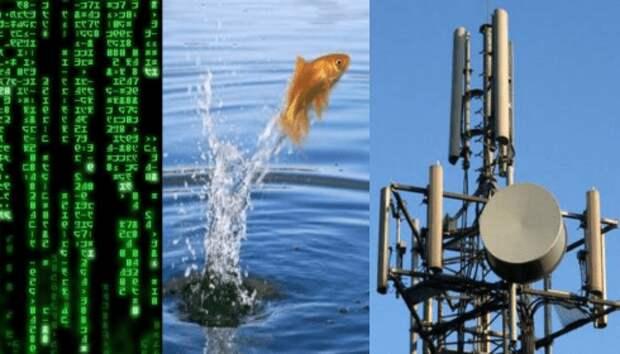 В Ухане сходит с ума даже рыба. Это новый вирус, 5G или перезагрузка Системы?