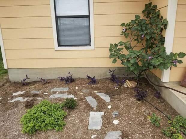 И один незнакомец, как-то проходя мимо дома мужчины, не смог не заметить появление нового суккулентного сада в мире, история, люди, растения, сад, цветы