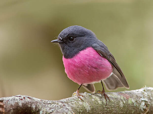 Природа - лучший художник: 40 животных неожиданной расцветки - 14