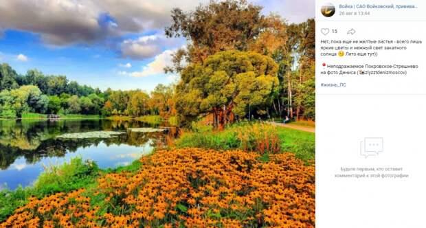 Фото дня: буйство красок природы в парке «Покровское-Стрешнево»