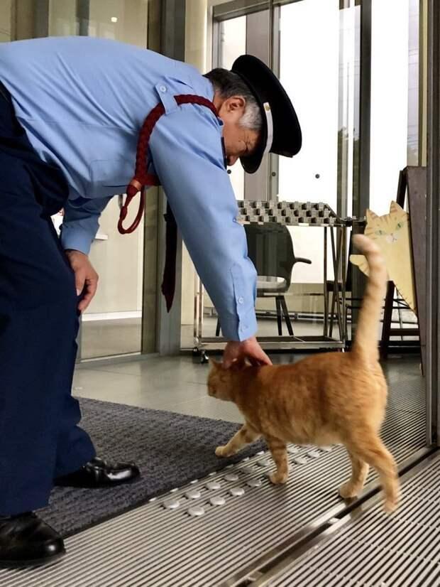 И он не одинок — вскоре после первой атаки на двери музея, к чёрному коту присоединился рыжий животные, кот, кошки, милота, музей, япония