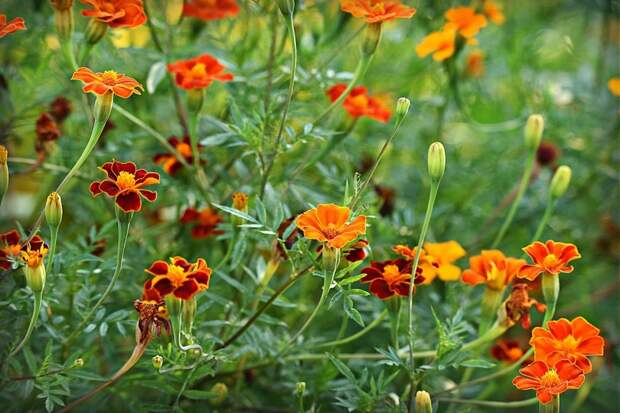На Полтавской проведена посадка цветов
