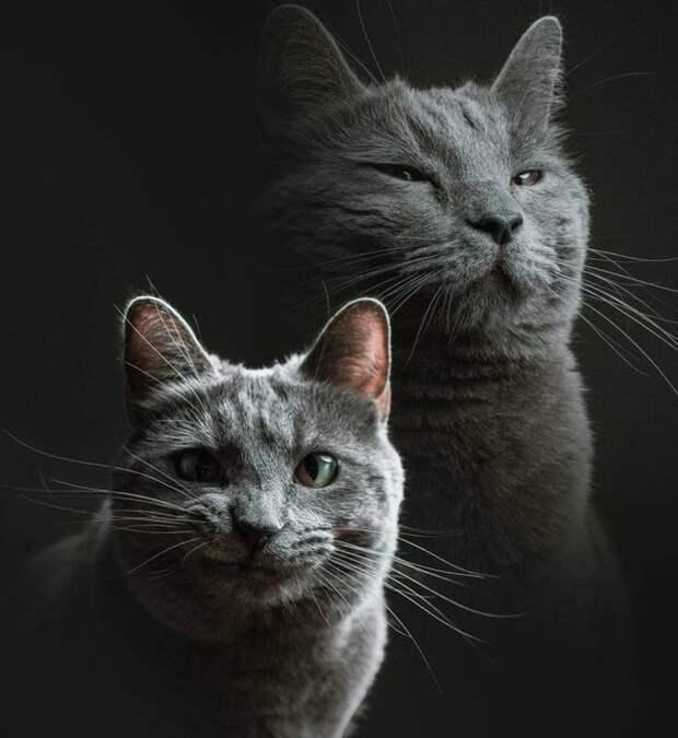 Животные, которые поднимут вам настроение