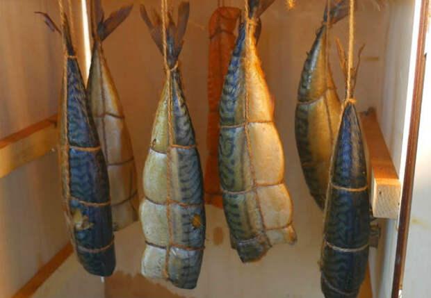 Рыба холодного копчения: коптим на даче в коробке