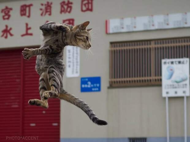 Кошки ниндзя в объективе