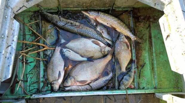 Известия: браконьерский лов рыбы продолжается в России
