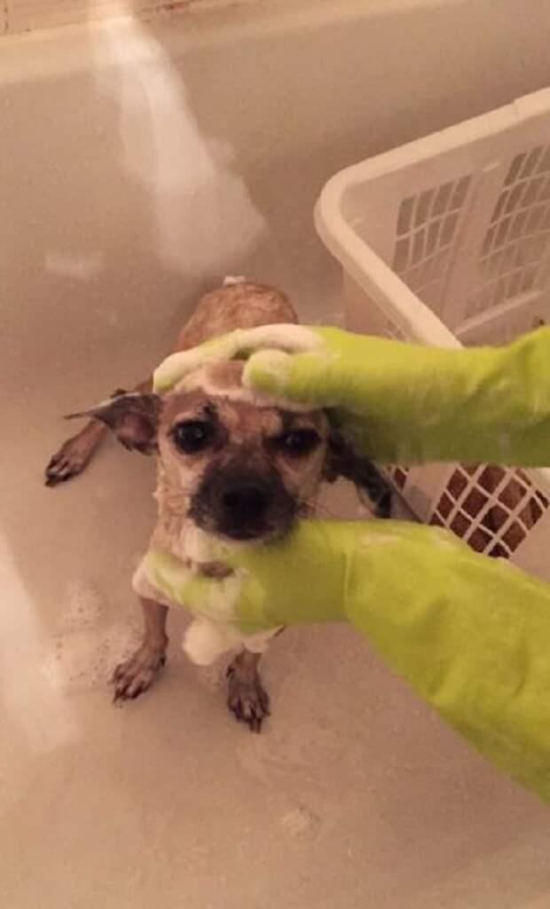 Собаку моют