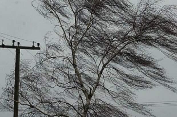 В Костромской области выпустили метеопредупреждение о штормовом ветре и грозе