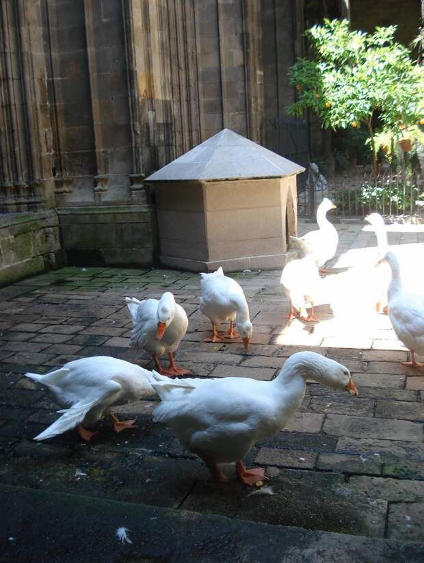 Собор, где живут гуси