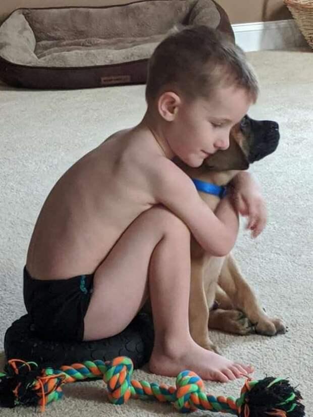 Родители наказали мальчика, а его верный пёс пошёл следом за ним и тоже стал в угол