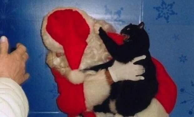 На, получи, подарочек! животные, не любят, новый год, планы, смешные, фото