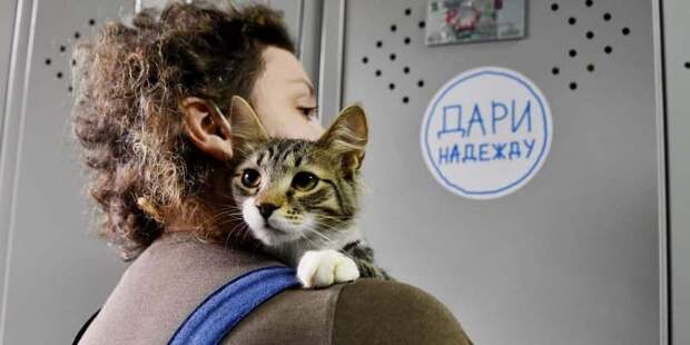 Новых хозяев в столичных приютах ждут более 17 тысяч животных