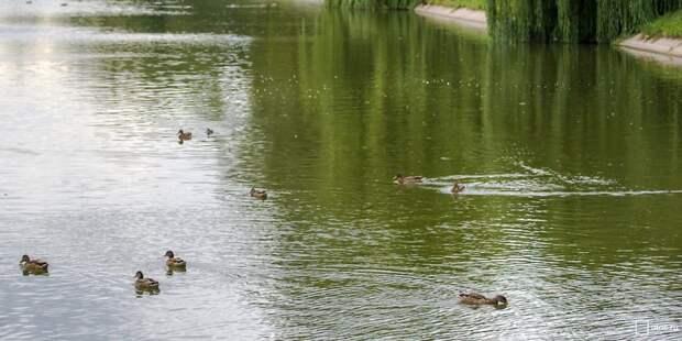 В парке «У Джамгаровского пруда» починили перила и настил набережной – управа