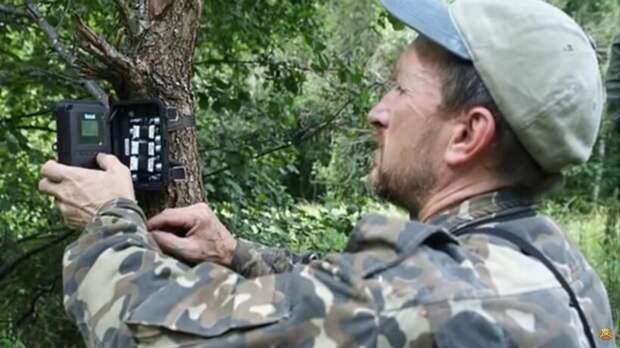 Видео: Биолог установил в чернобыльском лесу фотоловушки и показал, кто там обитает