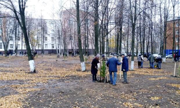 В сквере имени М.Т. Калашникова в Ижевске высадили 100 кедров и 600 тюльпанов