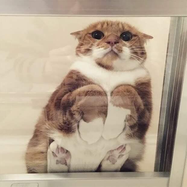 Мурр, я такой милый, покормите меня! котики, коты, милота, мотики, сквозь стекло