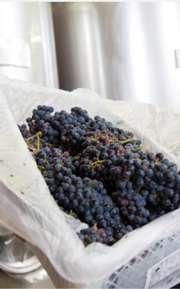 Рецепт домашнего виноградного вина