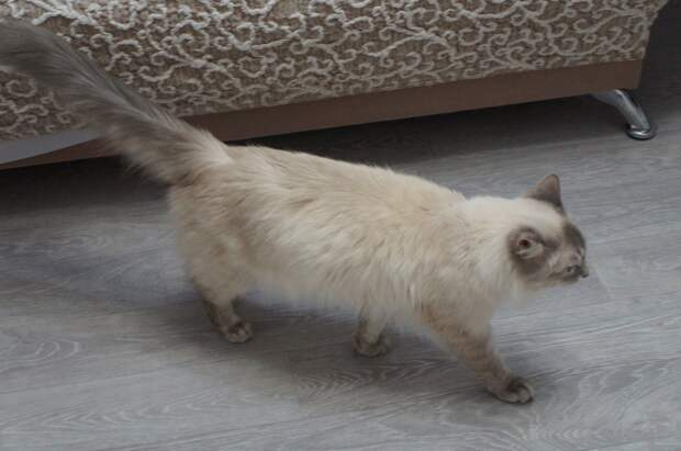 Котик Лёвушка! Новости о красивом малыше с печальной судьбой…