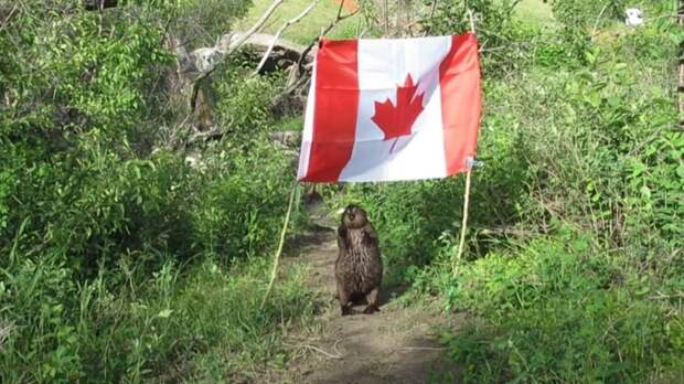 В Канаде Картошка украла флаг