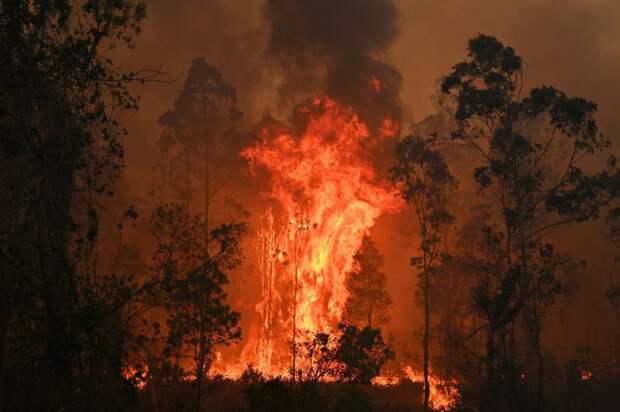 Аномально тёплая зима, лесные пожары в Австралии и русские туристы в Лапландии