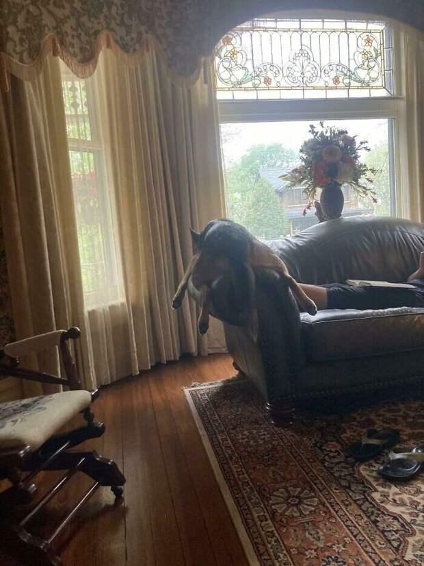 20+ чудаковатых собак, которые надолго зарядят вас позитивом