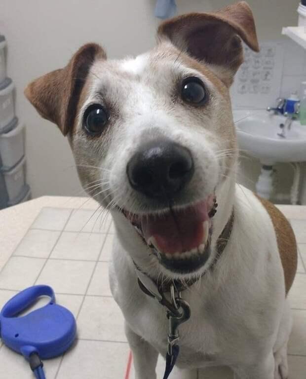 Работа ветеринара — для людей с огромным сердцем