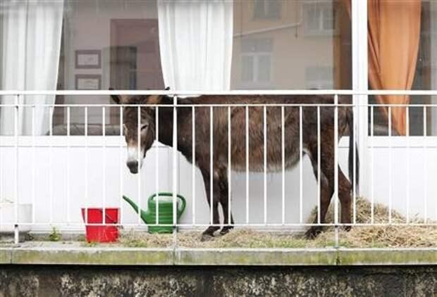 Что только не хранят на балконах балкон, балконы, на балконе, прикол, че за хрень на балконе?, юмор