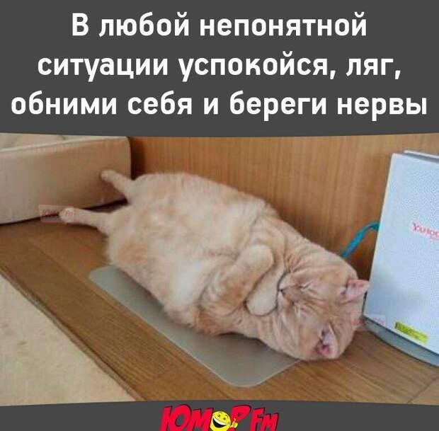 Мой золотой котенок