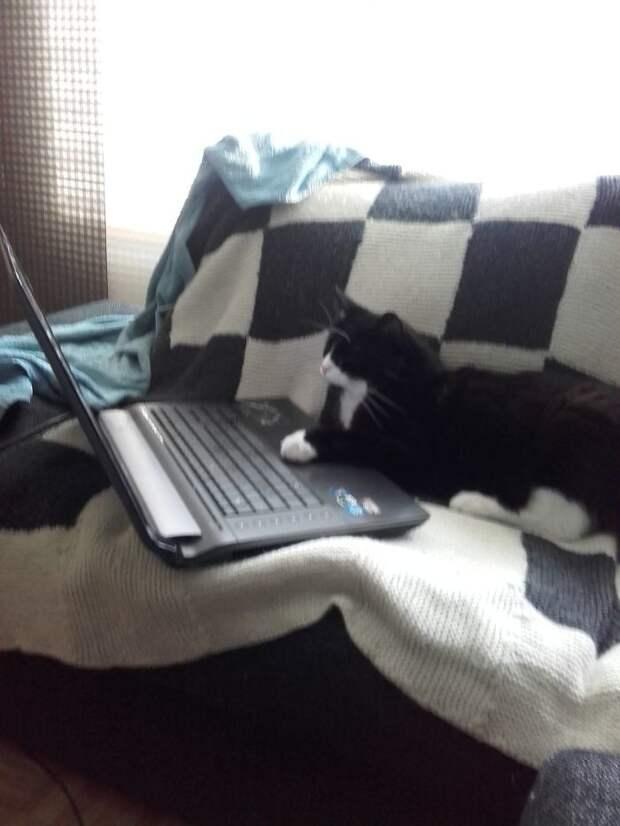 Некоторые любят полазить в интернете животные, коты, кошки, неожиданно, привычки, странности, фото, юмор