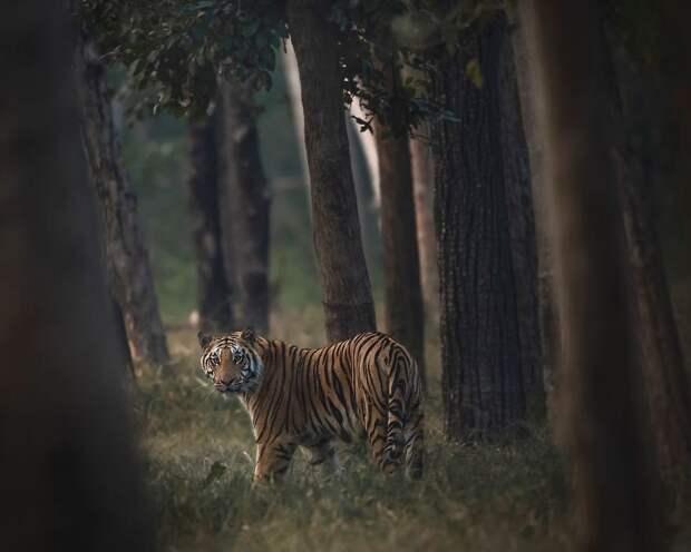 30 лучших фотографии дикой природы с конкурса #Nature2020 Agora