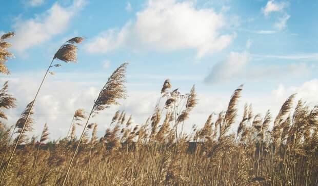 В четверг в Ростовской области резко похолодает и подует сильный ветер