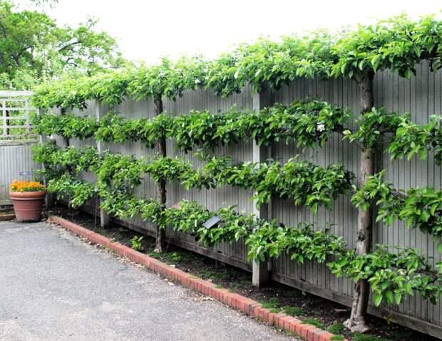 Удивительные живые украшения и конструкции для сада, сделанные своими руками