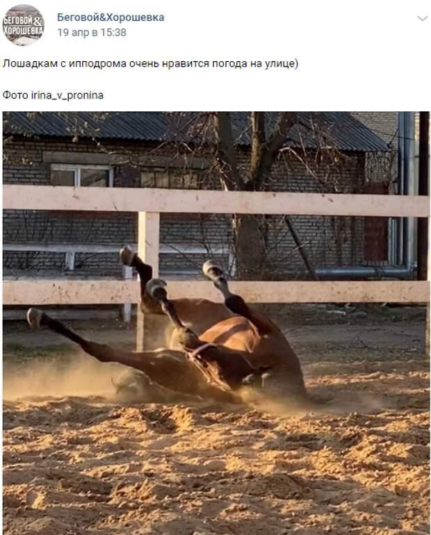 Фото дня: лошадь на ипподроме решила погреться на солнце
