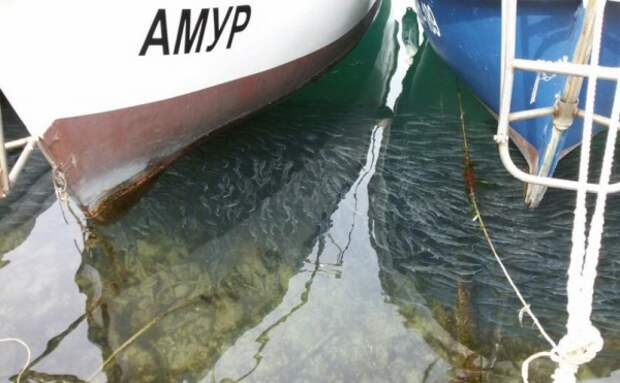 Кефаль заполонила Балаклавскую бухту (ФОТО)