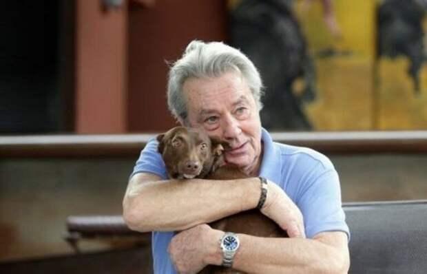 Ален Делон – собачий чемпион ален делон, собака, чемпион