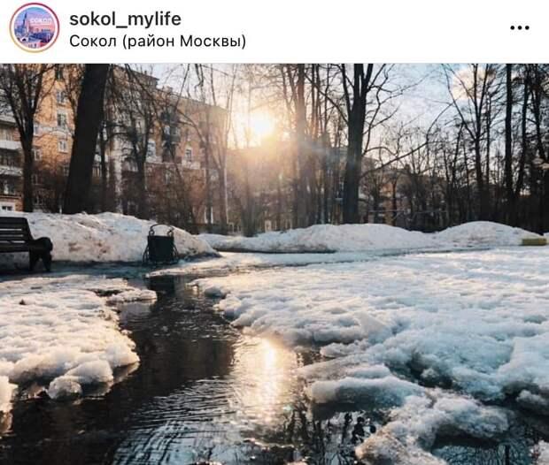Фото дня: зима постепенно уходит из Сокола