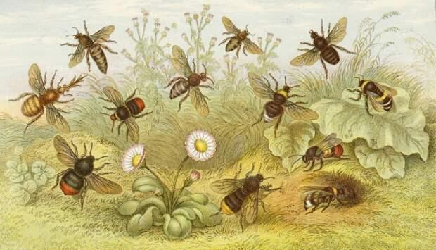 Чем полезен сон на пчелиных ульях