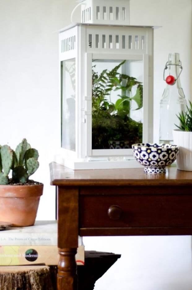 Комнатные растения в стекле являются весьма оригинальным решением для любого современного интерьера.
