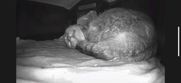 Мужчина поставил камеру, чтобы проверять, все ли в хорошо в домике котов