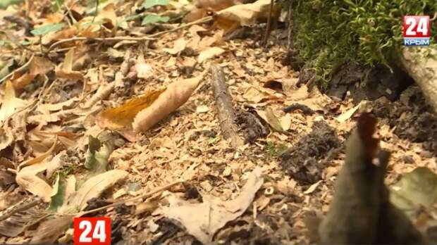 Рейды по лесам: в Крыму активизировались незаконные дроворубы