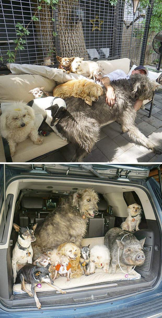 4. Стив приютил 10 пожилых собак и свинью животные, жизнь, кот, питомец, семья, собака, фото
