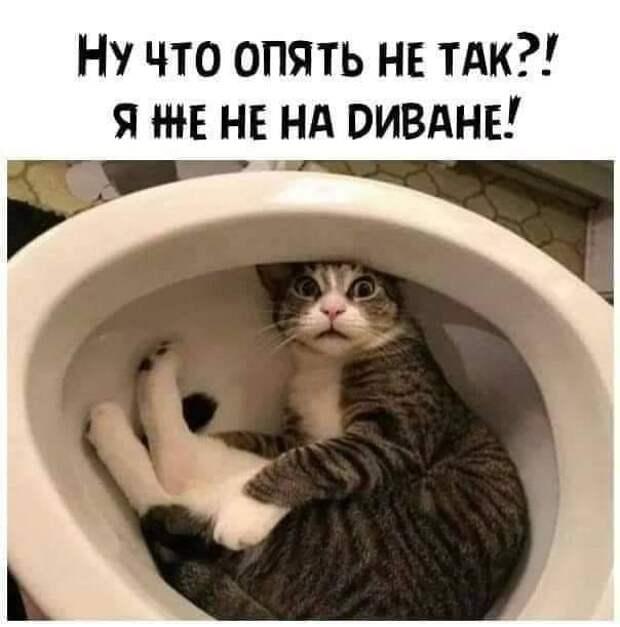 Возможно, это изображение (кот и текст)